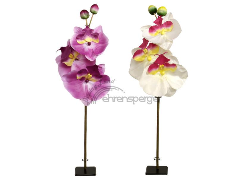 orchidee xxl in versch farben sfr 49 50. Black Bedroom Furniture Sets. Home Design Ideas