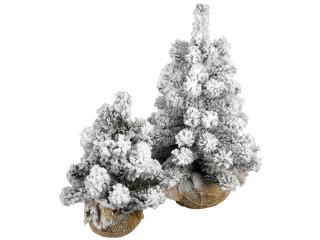 Tannenb ume - Beschneiter weihnachtsbaum ...