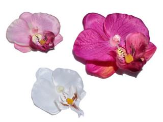Orchideenbluten Babylon 12 Stuck In Versch Far